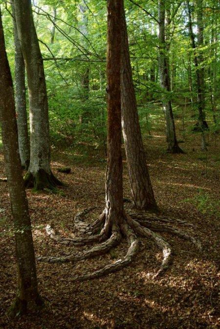 Деревья зоны